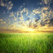 Summer sunset landscape: cloudy sky over green field - Stock Photo