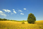 Summer scene: alone green tree in field on blue sky background — Stok fotoğraf