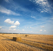 Summer harvest field scene - hay squares — Stock Photo