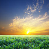 Beautiful sunset over green summer green grass meadow — Stock Photo