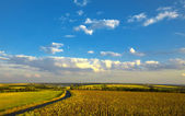 Summer rural landscape: cloudy blue sky over field — Stock Photo