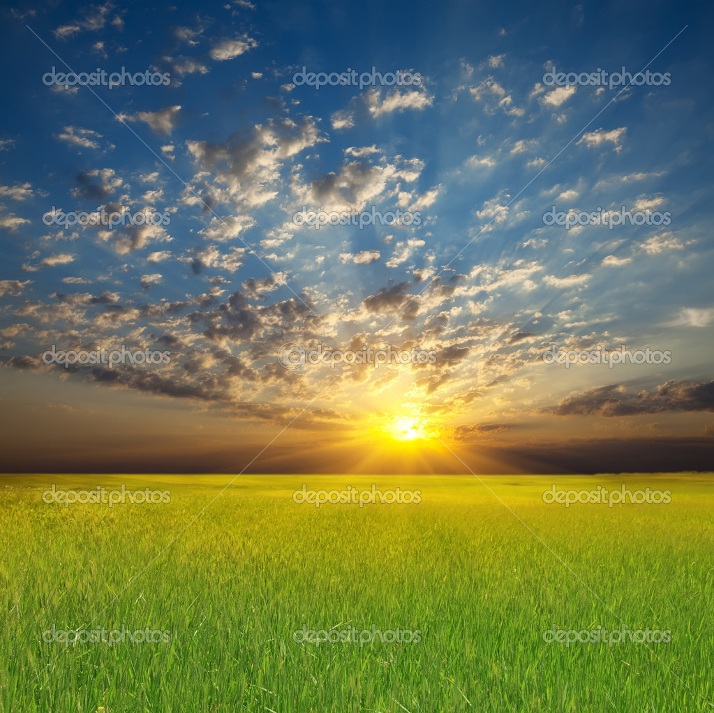 Summer sunset landscape: cloudy sky over green field — Stock Photo #3695907