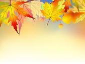Hojas de otoño colorido fondo. — Vector de stock