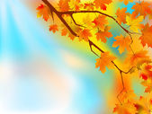 Autumn leaves background in a sunny day. — Stock Vector