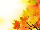 Multi colored fall maple leaves background. — Vetor de Stock