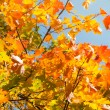 Autumn leaves , very shallow focus. — Stock Photo #3896442