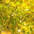 Autumn leaves , very shallow focus. — Foto Stock
