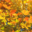Autumn leaves , very shallow focus. — Stock Photo #3903421