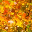 Autumn leaves , very shallow focus. — Stock Photo #3903712