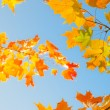 Autumn leaves , very shallow focus. — Stock Photo