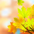 Autumn maple leaves, very shallow focus. - Stock Vector