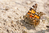 Painted lady sitting on the ground — Stock Photo