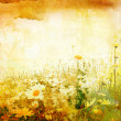Beautiful grunge background with daisies - Stockfoto