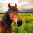 Royalty-Free Stock Photo: Beautiful horse close up