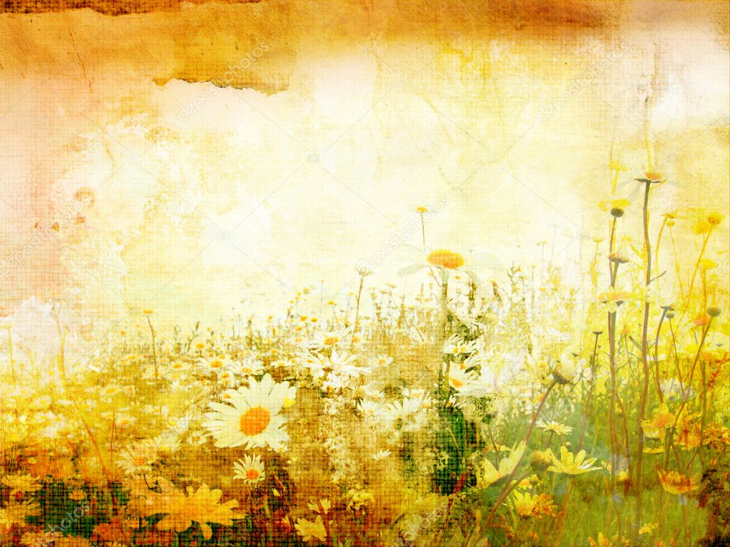 Beautiful grunge background with meadow of daisies — Stock Photo #3662593