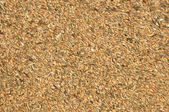 Grain (texture) — Stock Photo