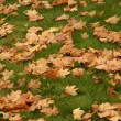 Stock Photo: Yellow leaves on green lawn