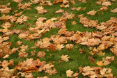 Yellow leaves on green lawn — Stock Photo