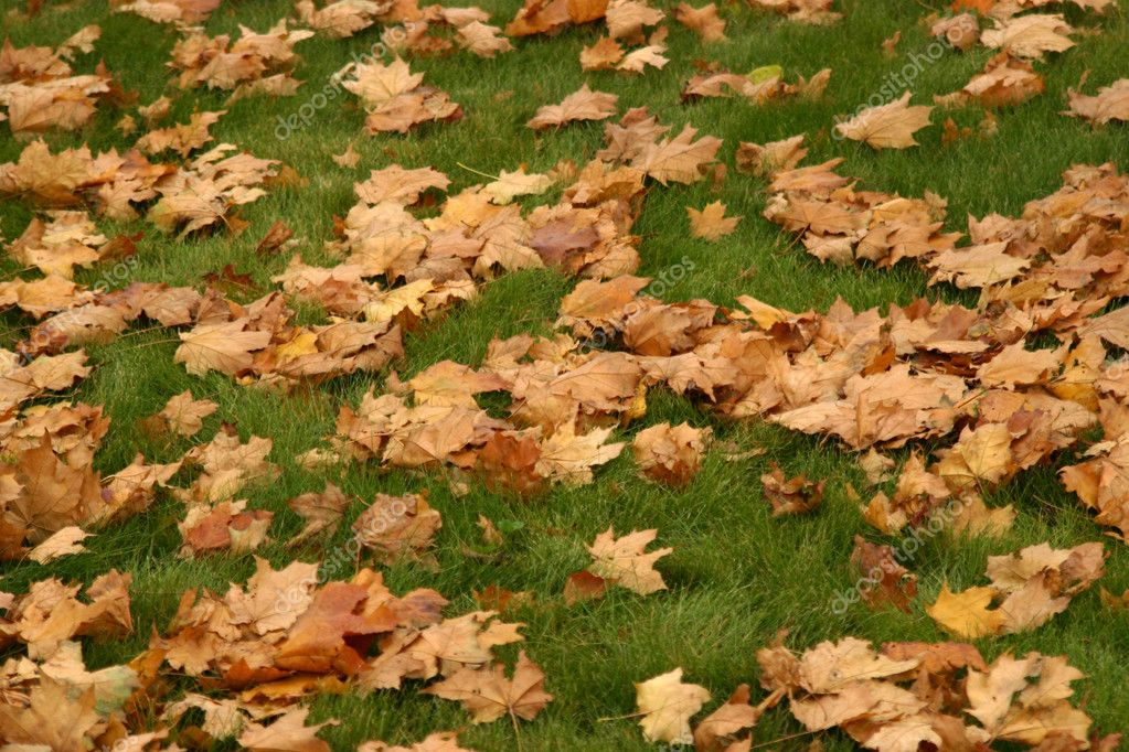 Many autumn yellow leaves on green lawn — Stock Photo #3882879