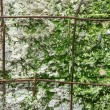Concrete wall for background - Stock Photo