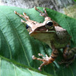 Stock Photo: Frog on leaf