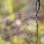 Spider web — Stock Photo #3754669