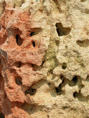 Multicolored limestone — Stock Photo