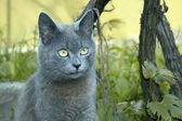 Gray cat outdoors — Stock Photo
