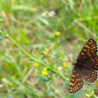 Butterfly among the motley grass — Stock Photo