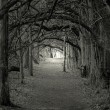 Creepy forest - Foto de Stock