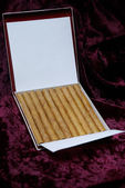 Luxury cigarillo package — Stock Photo