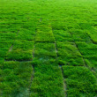 Newly planted grass field blocks, wide angle perspective — Stock Photo