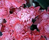 Tropical flower — Stock fotografie