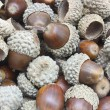 Autumn acorns — Stock Photo