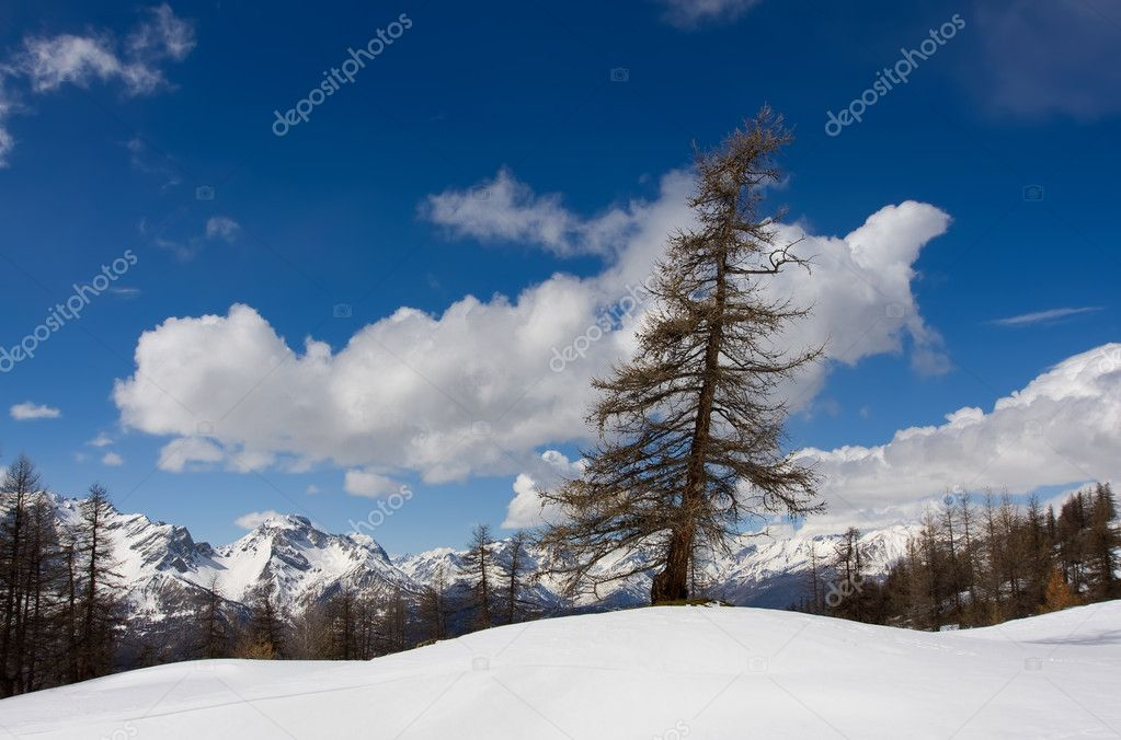 Fur-tree on the edge of rock — Stock Photo #3747290