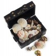 Wood chest with seashells — Stock Photo