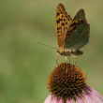 Бабочка на цветке — Stock Photo