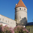 Stock Photo: Fortification tower in Tallinn