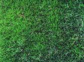 Green grass, background — Stock Photo