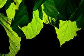 Leaves on black — Stock Photo