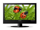 Monitor de lcd widescreen — Foto Stock