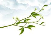 Rama de árbol — Foto de Stock