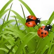 Bright red Lady Bug — Image vectorielle