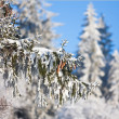 Foto Stock: Pine cones on branch covered with fluffy snow