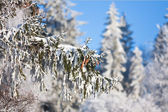 Dennenappels op de tak bedekt met zachte sneeuw — Stockfoto