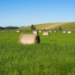 Grass field with hay balls on blue sky - Stock Photo