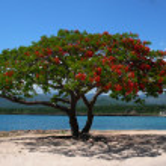 Red tree — Stock Photo #3730282