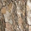 Bark — Stock Photo #3812185