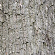 Tree bark — Stock Photo #3815110