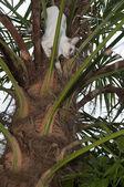 Stuck up a tree — Stock Photo